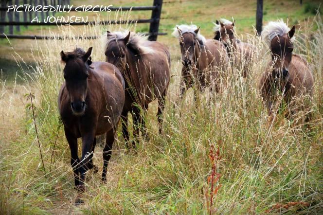 Classic Pony Schirmer AJ Jungstuten