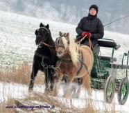 Classic Pony Schirmer Ausfahrt Leo & Life