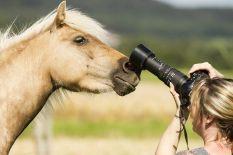 """Classic Pony Schirmer """"Pia"""" Foto: Dajana Wagner / Photos by Dajana"""