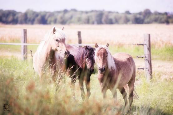 """Classic Pony Schirmer """"Unsere kleine Herde"""" Foto: Yela Benne Photography Fotografin mit Herz"""