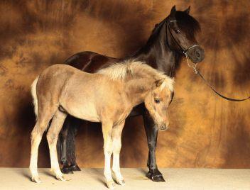 """Classic Pony Schirmer """"Life"""" & """"Lee MK"""""""