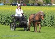Classic Pony Schirmer Janosch vom Taubergrund