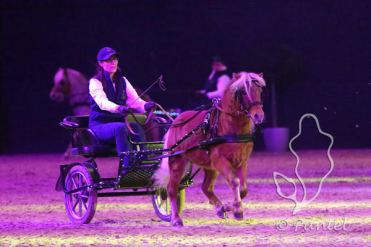 Classic Pony Schirmer