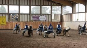 Classic Pony Schirmer Classic Pony Dream-Team