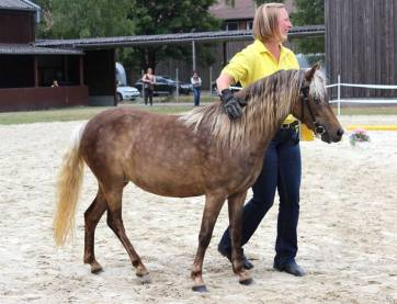 """Classic Pony Schirmer """"Lindt MK"""""""