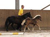 """Classic Pony Schirmer """"Janero MK"""""""
