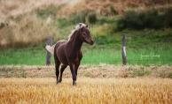 Classic Pony Schirmer Janero MK
